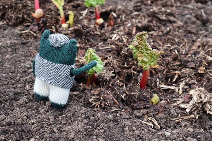 First Rhubarb - Vegetable Garden - CrawCrafts Beasties