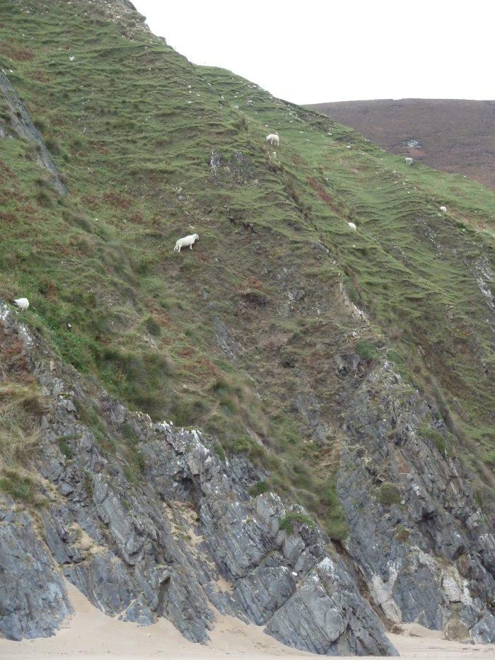 Intrepid Cliff Climbing Sheep - CrawCrafts Beasties