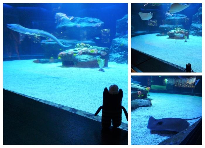 The Reef Tank at Aquazoo - CrawCrafts Beasties