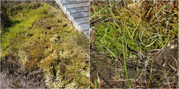 All the Mosses of the Bog - H Crawford/CrawCrafts Beasties