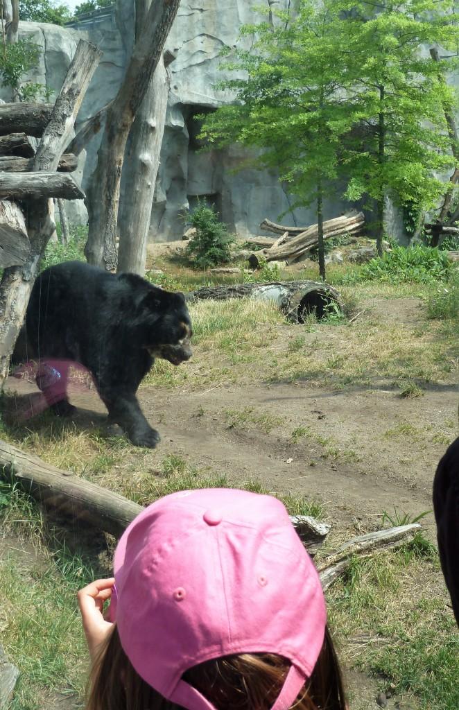 Mummy Bear at Frankfurt Zoo - CrawCrafts Beasties
