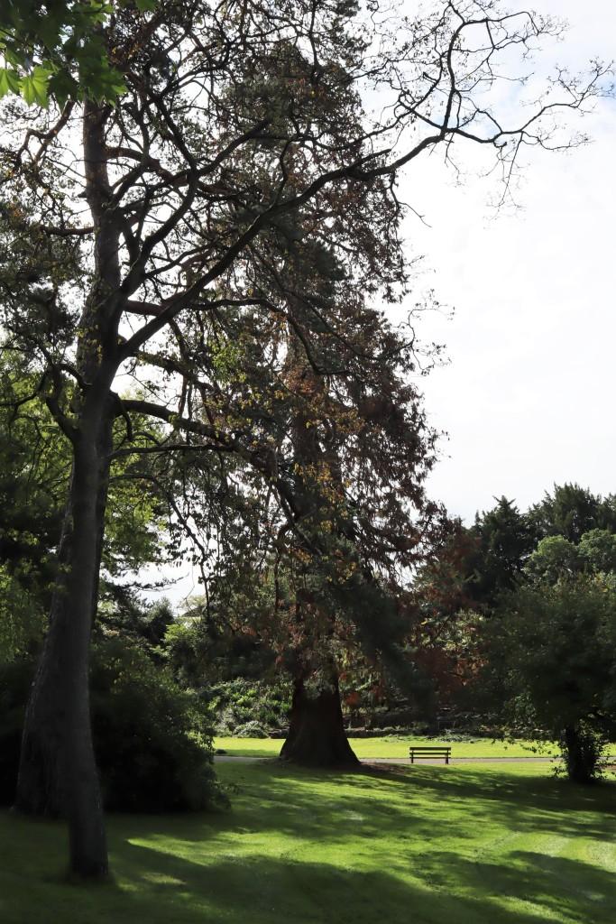 Monster Trees at the Botanic Gardens - CrawCrafts Beasties