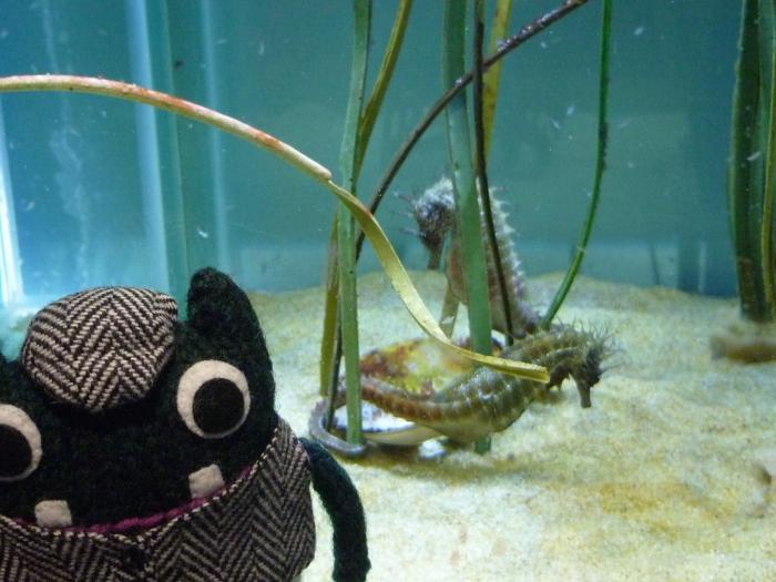 Plunkett in the Seahorse Nursery - Sea Zoo - H Crawford/CrawCrafts Beasties