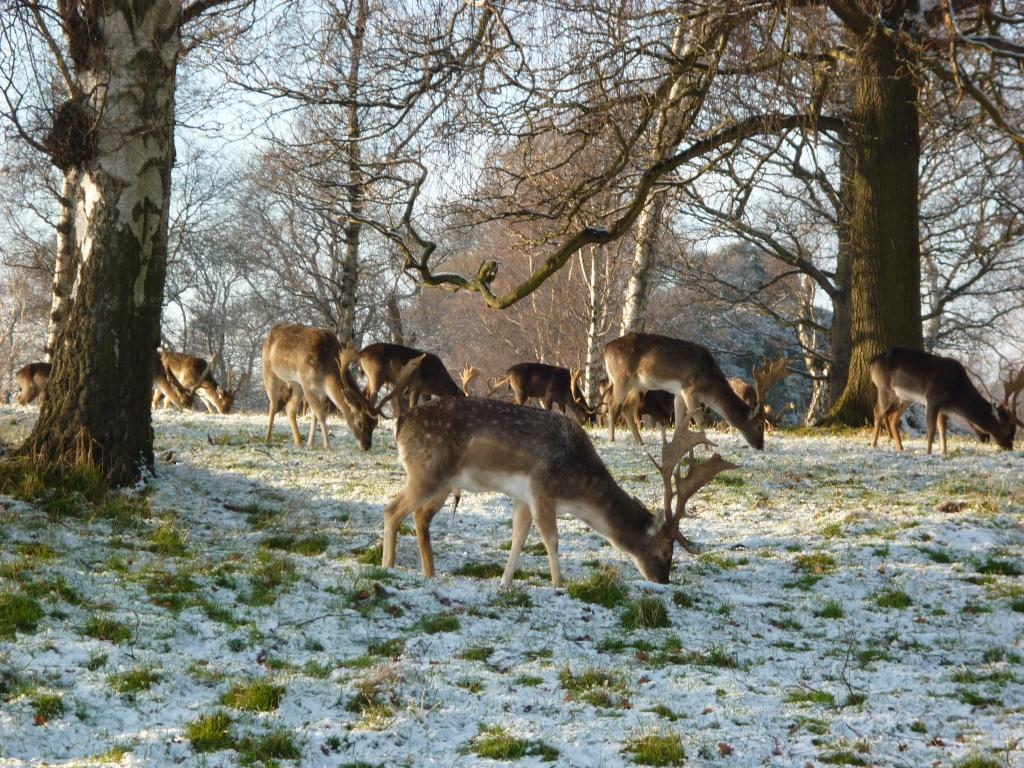 Deer in the Phoenix Park, Dublin - CrawCrafts Beasties